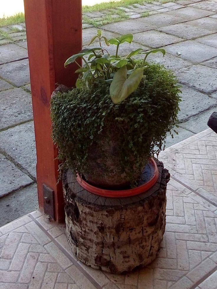 #plantasdemamá