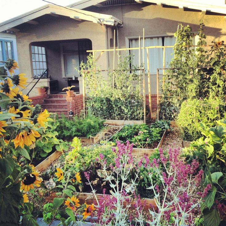 40 best Front Yard Veggie Gardens images on Pinterest Veggie