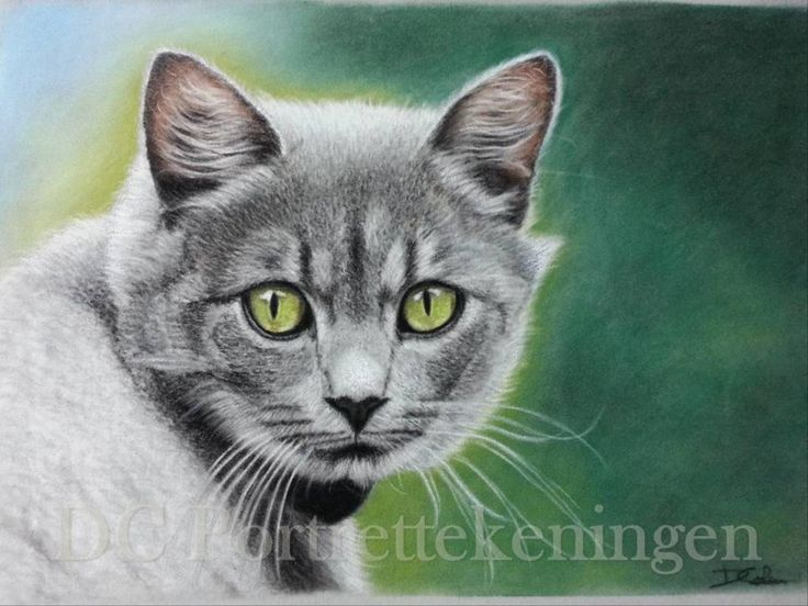 """""""Kitty"""" realistic portrait drawing made with pastelpencils"""