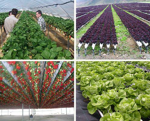 Proyectos Productivos en Tecnología de Cultivo NGS : .: Hydro Environment .: