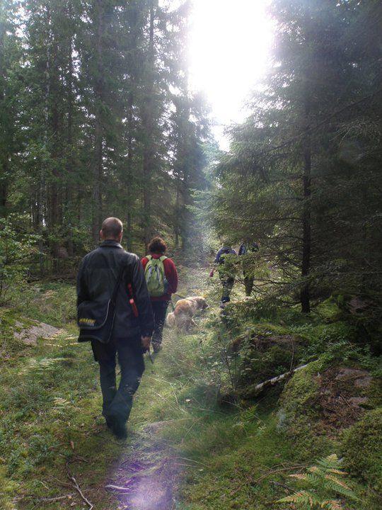 Småland! Fågelkvitter, granskogsdofter och tystnad. Genom skogar och ängar, längs sjöar och stenmurar, förbi stugor och gärdsgårdar - här upplever ni det gen...