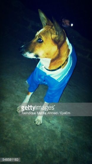Stock Photo : Dog In Clothes