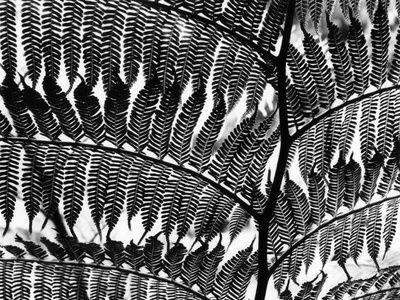 Kunst (svart-hvitt-fotografi) Plakat hos AllPosters.no