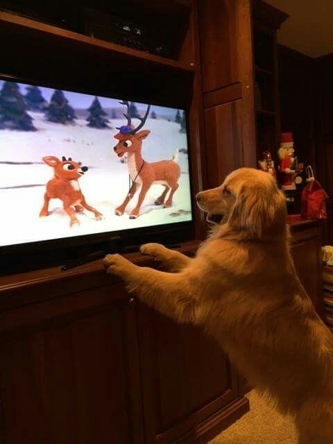 He loves Rudolph!