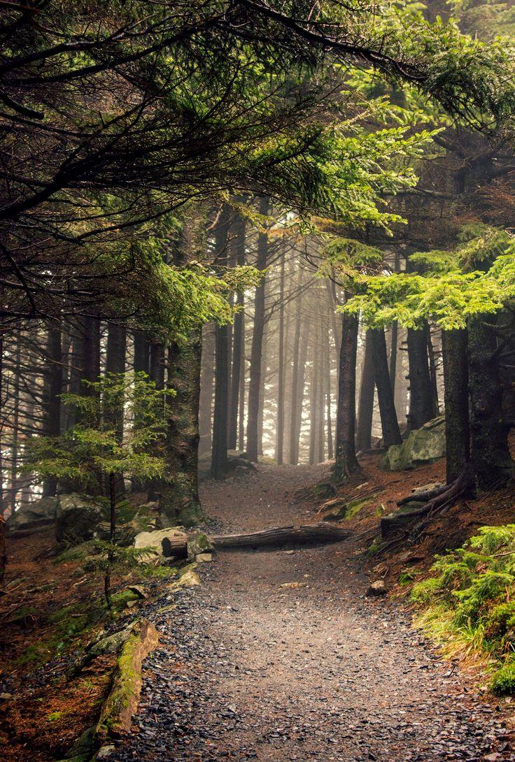 Appalachian Trail (Roan Mountain, North Carolina) by Kaila