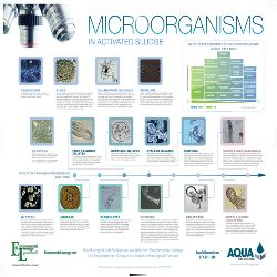 AquaOnDemand Releases new Microorganisms in Activated Sludge Poster