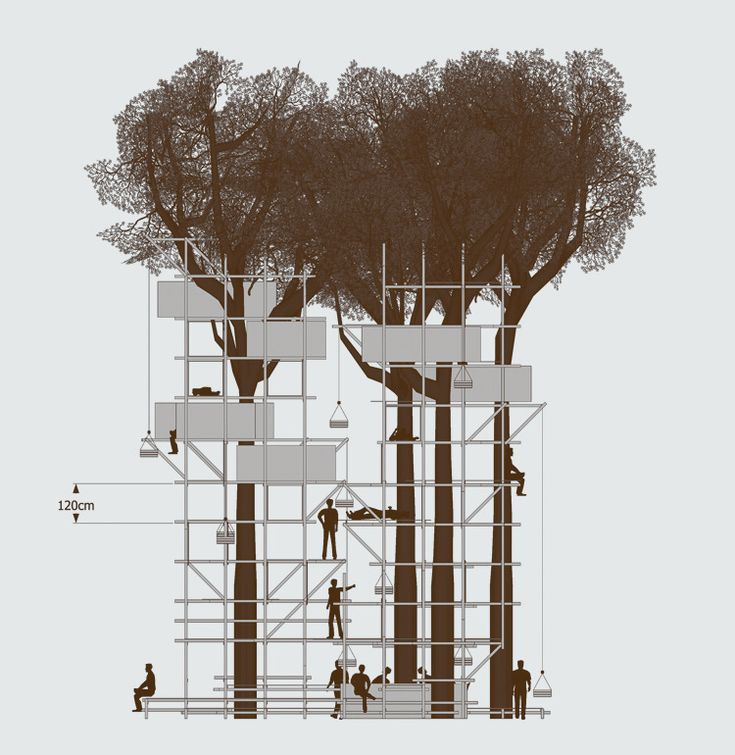 25+ Best Ideas About Tree Structure On Pinterest