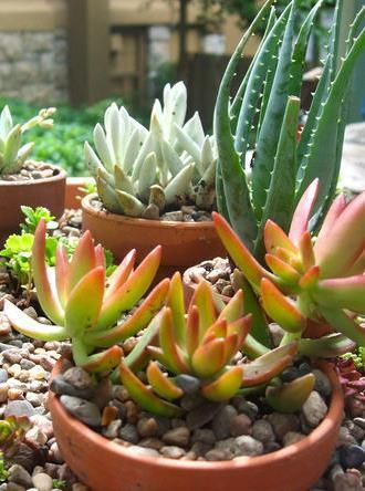 Get creative with container gardening and pot some succulents. Perfect for centerpieces at a summer party, to give as gifts or to place around the house, they are easy to plant and are nice to incorporate next your typical flower pots.