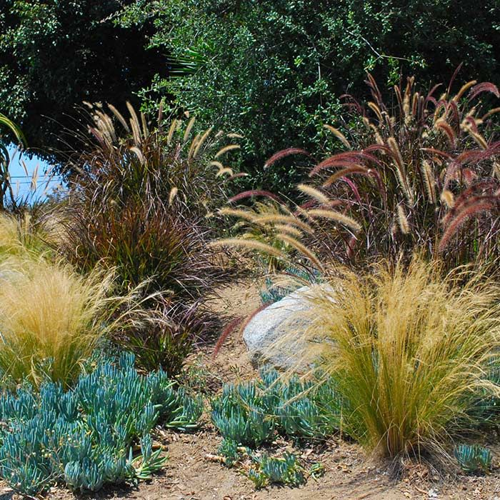 356 best garden rocks sand and plants that grow there for Ornamental grasses in the landscape