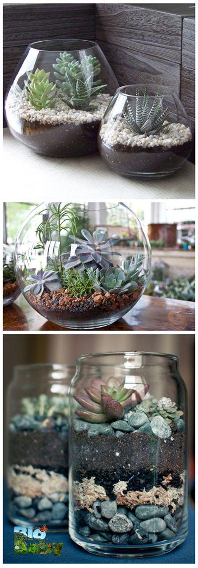 Crea un jardín de cactus y piedras adentro de una pecera o un frasco de vidrio.
