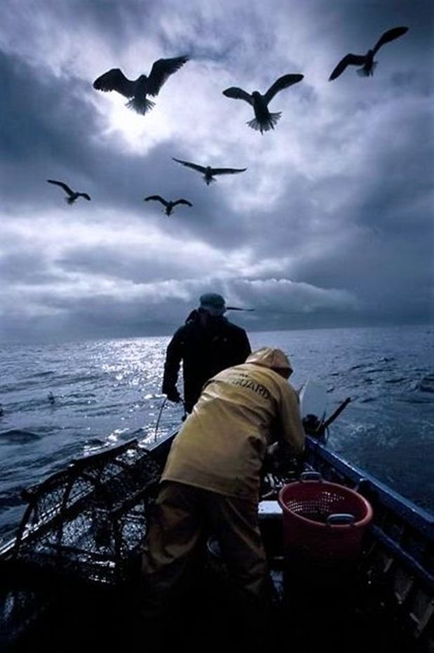 Fishing for Lobsters ~ Orkney, Scotland.