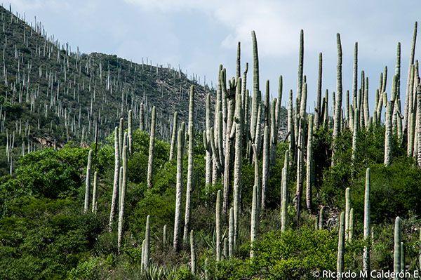 Mexican Landscapes: Zapotitlan & Sn Juan de laRaya, Puebla, Between Cactus, Stars and Fossils