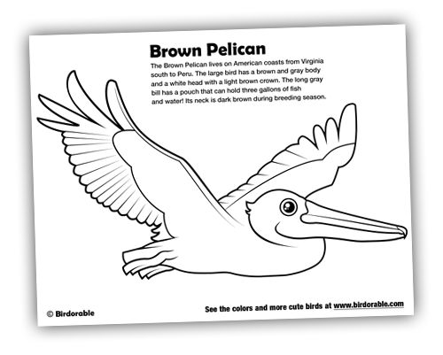coloring pages birds of prey google search