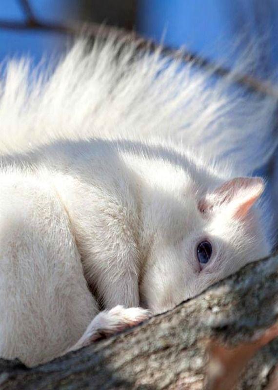Camera shy Squirrel