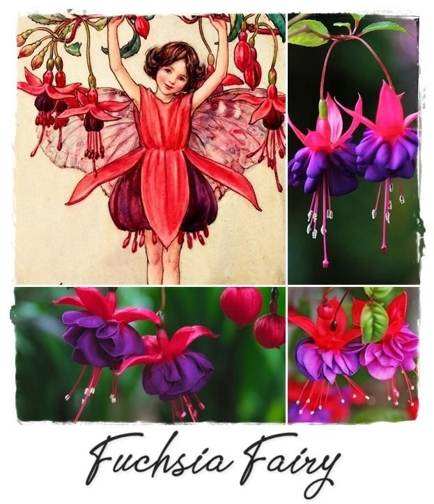 Fuchsia Fairy And Fuchsia Flowers Flower Fairies Fuchsia Flowers Christmas Ornaments