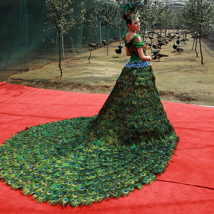 A peacock farm in Linyi, northern China's Shandong Province, has created a wedding gown made out of more than 3,000 peacock feathers. According to farm owner Qiu Yun it took 3,150 feathers collected from more than 200 male peacocks to make the dress, which took two months to be put together. (Quirky China News / Rex Features)