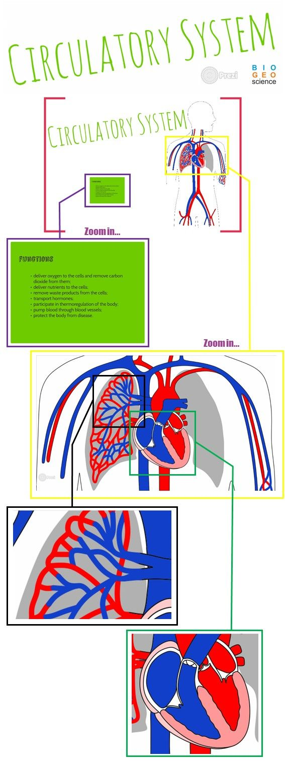 Use this TpT product to teach the Circulatory System: Systemic and Pulmonary Circulations, Blood Cells, Chambers of the Heart, Cardiac Cycle and Blood Vessels. This Prezi leaves ppt presentations miles away! The teacher decides what can be explored and how exhaustive the explanations can be. NGSS: LS1.A; MS-LS1-3; HS-LS1-2. Extract the files and then run a file called Prezi.exe!