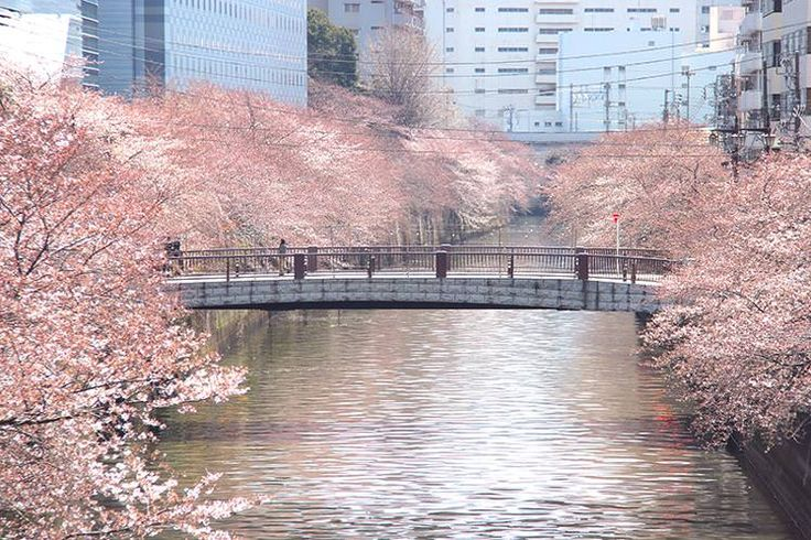 Tokyo celebrates the arrival of spring with a cavalcade of festivals old and new which transform temples, shrines and city streets into buzzing centres of activity.