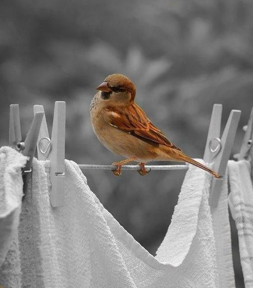 vintage girl / color splash / bird on a wire