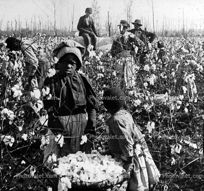 cotton field images of blacks | Cotton Pickers in the Field, Woman, Slave, Cotton Picker Images ...