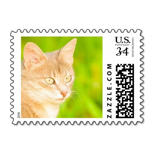cat postage stamp we are given they also recommend where is the best to buyReview          	cat postage stamp today easy to Shops & Purchase Online - transferred directly secure and trusted checkout...
