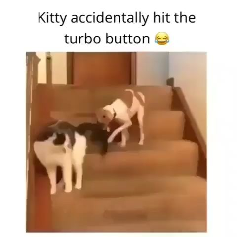 Du liebst 😍 Welpenhund:    – … cool_art_funny …