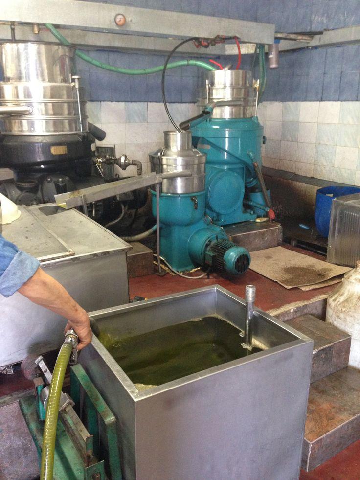 Theologos' olive press factory