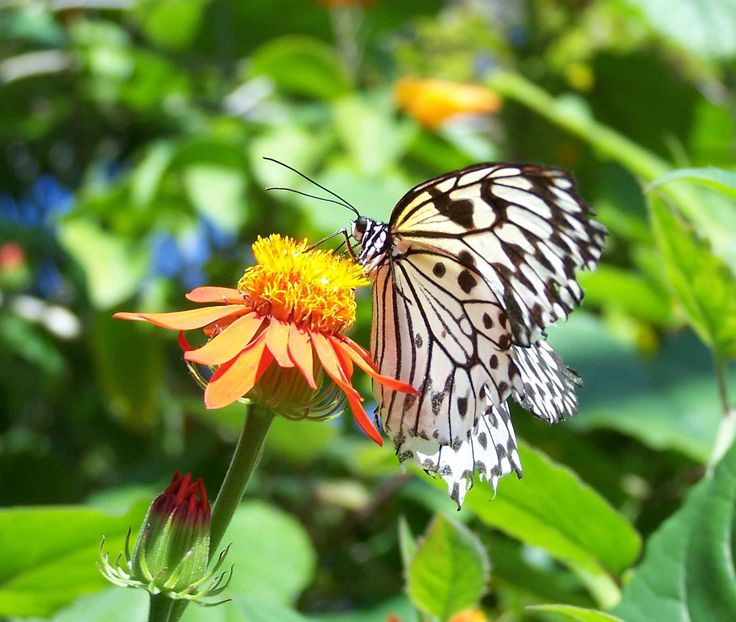 Butterfly - Enjoy nature with landscape photography and ...