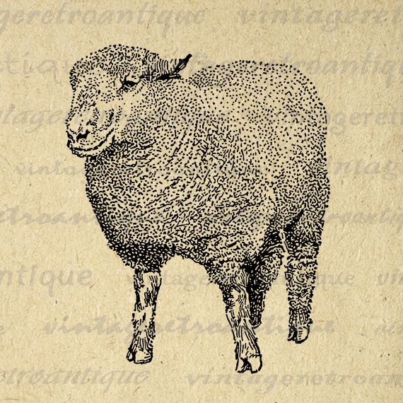 Printable Southdown Ram Sheep Graphic by VintageRetroAntique