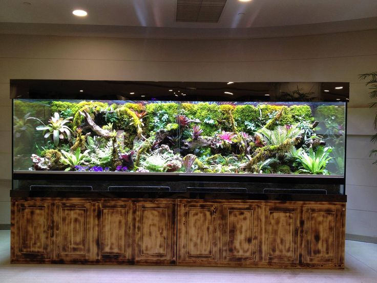 73 best images about paludarium on pinterest terrarium for Fish tank terrarium