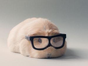 BooBoo est un adorable cochon d'inde, il pose avec ses amis comme des mannequins professionnels pour le magazine Guiné Pig Vogue. BooBoo et ses amis portent des lunettes de hippie, se baignent dans un baignoire rose, posent avec des oreilles de lapin et portent des rubans dans les cheveux. Les cochons d'Inde sont des animaux sympathiques qui peuvent être aussi petit qu'un rat ou grand comme un petit chien. Booboo pèse 1kg et a 2 ans, sa nourriture préférée est la... - BooBoo et ses amis…