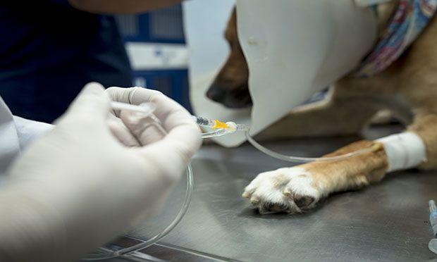 Explore San Miguel Medicina Veterinaria, a small animal clinic in Manizales, Colombia.