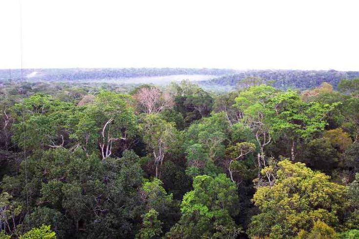 Bioma Amazônia