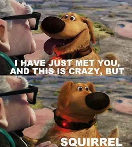 "Doug Funny Quotes: Funny Quote From The Movie ""UP"" This Movie Made Me Cry"