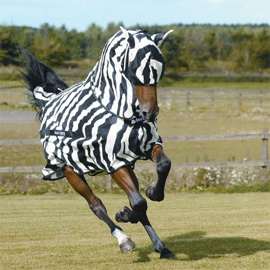 Bucas Zebra Print Fly Sheet With Neck Horse Rugs Horses Fly Rugs