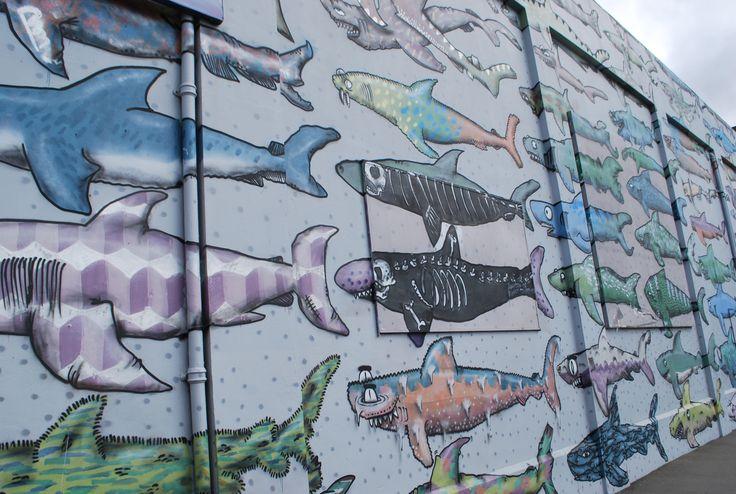 shark wall, wellington
