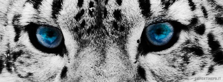 occhi di tigre animale - Cerca con Google