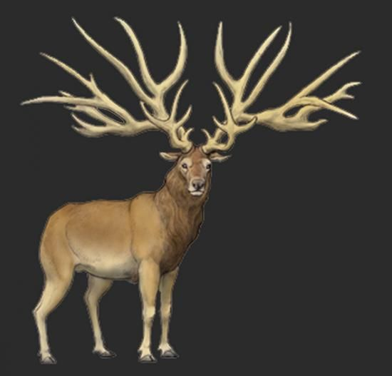 Extinction around the world: Irish Elk and Bush-Antlered Deer