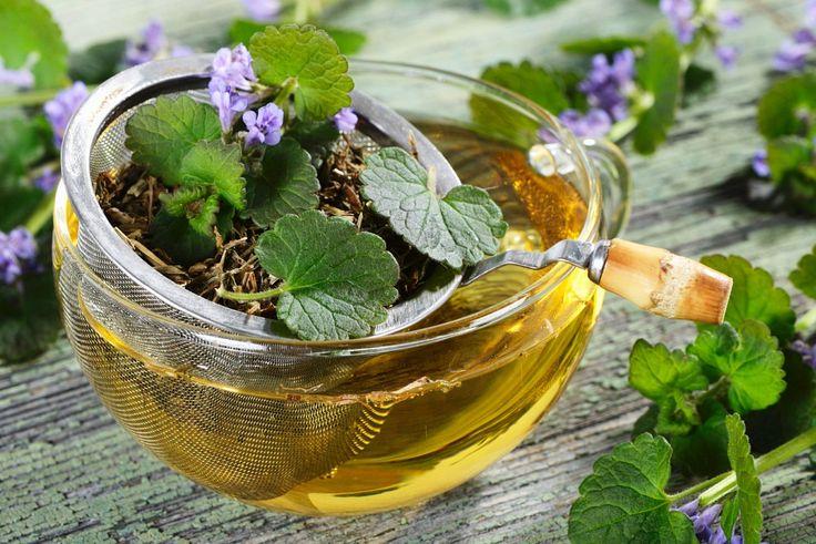 Tee von der Gundelrebe - Als altbekannte Heilpflanze wirkt Gundermann stoffwechselanregend und ausgleichend. Seine antibakterielle und entzündingshemmende Wirkung wird gerne bei Erkältungen und Wunden genutzt. | http://eatsmarter.de/rezepte/tee-von-der-gundelrebe