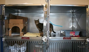 BC SPCA: Vancouver SPCA introduces cat portals, increases welfare for shelter cats