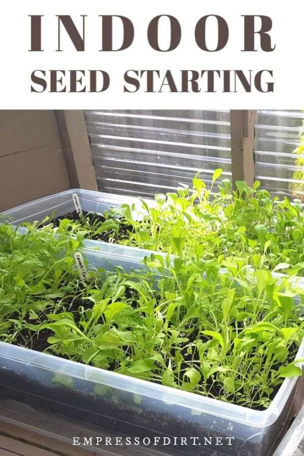 Indoor Seed Starting For Beginners Sow Indoors Grow Outdoors Is A