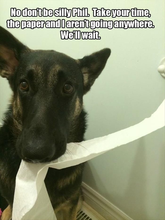 What Your Pets Are Really Thinking While They Watch You Go To The Bathroom 20 Pics Germanshepherd German Shepherd Dogs Animal Antics Pets
