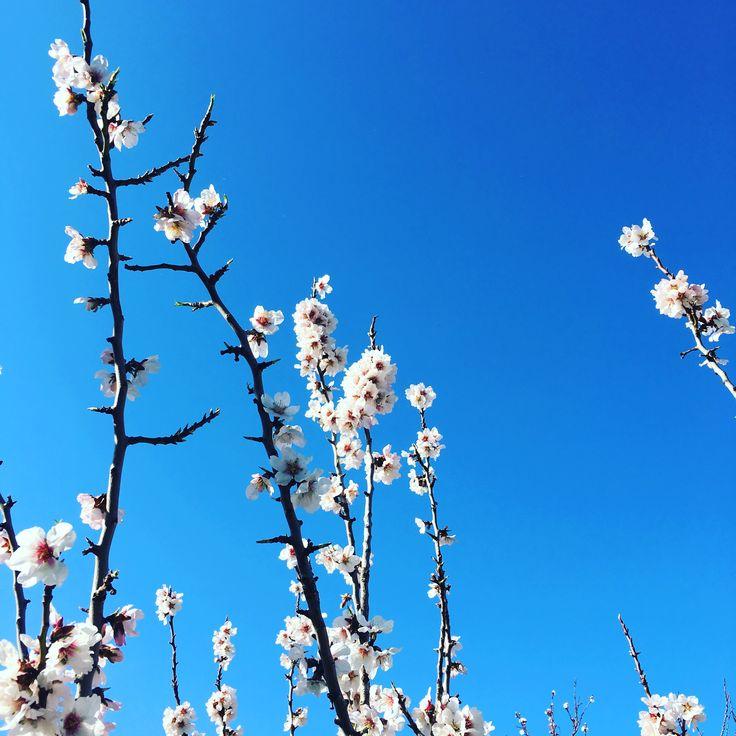 Flowers,Spring