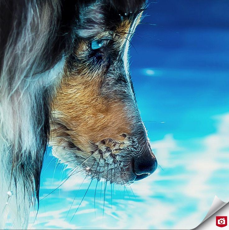 Dit prachtige dierenportret is gemaakt door Wendy Croes, ons Nieuwe Talent! De blauwe tinten en de blik in de ogen van de hond zijn indrukwekkend en we zijn benieuwd naar haar andere foto's!  Bekijk het profiel van wendyroes: http://wendyroes.zoom.nl/