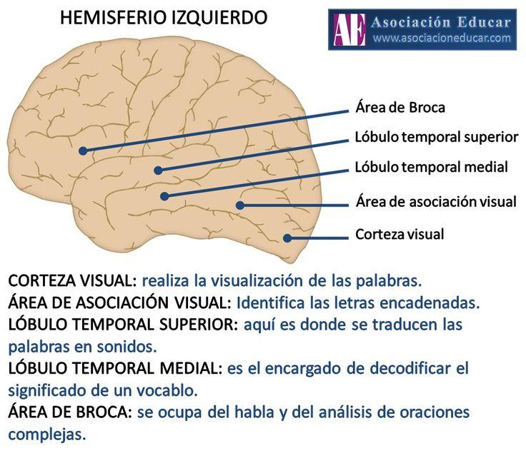Infografía Neurociencias: Hemisferio Izquierdo.   Asociación Educar
