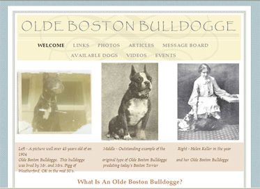 Olde Boston Bulldogge (Olde Boston Bulldog) Breed Information and ...