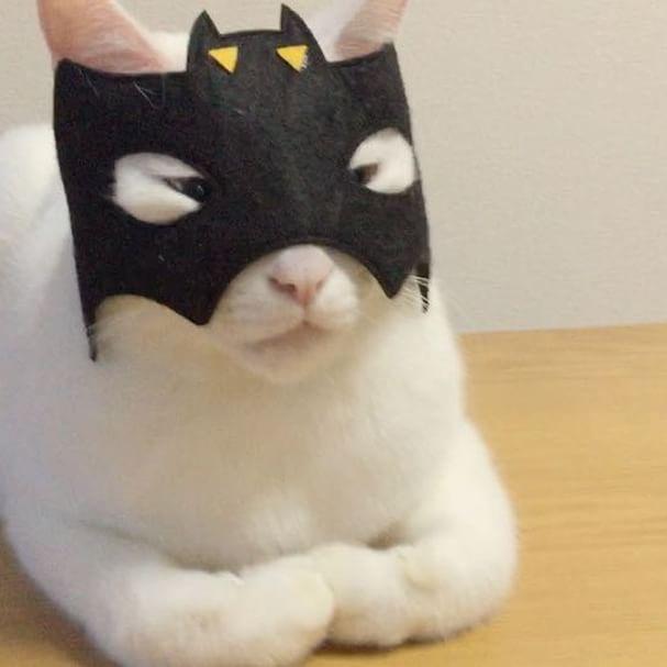 宇野家の仮装 ※お母はんの我慢できひんかった笑い声に注意☝︎ #八おこめズラ #八おこめ動く #八おこめ #ねこ部 #cat #ねこ