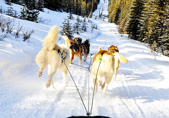 Dog-Sledding! Christmas in Canada. My Stable Life (blog).