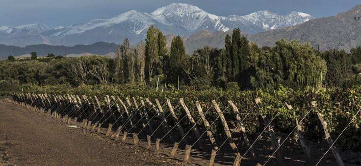 Bodega #Nieto #Senetiner (Luján de Cuyo, #Mendoza)