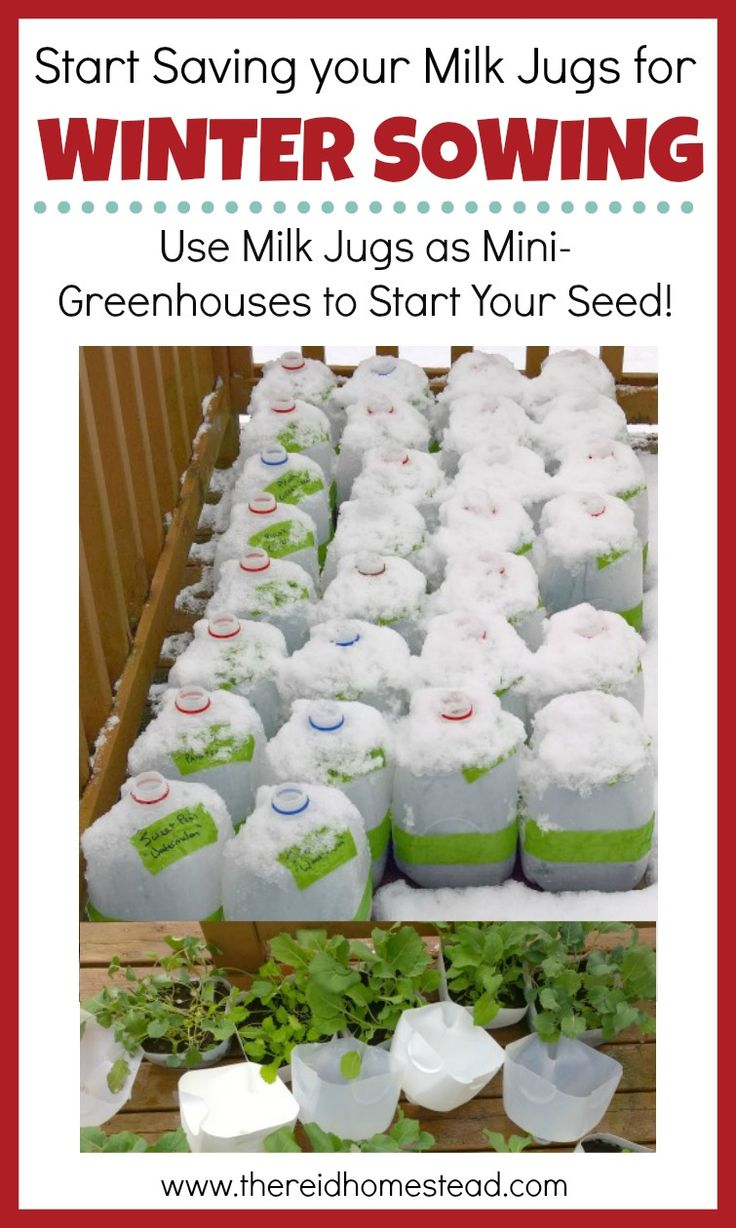 Seed Starting 101: Winter Sowing ,  The Reid Homestead | Blogger | Homesteading | Gardening | Chickens | Preserving Food